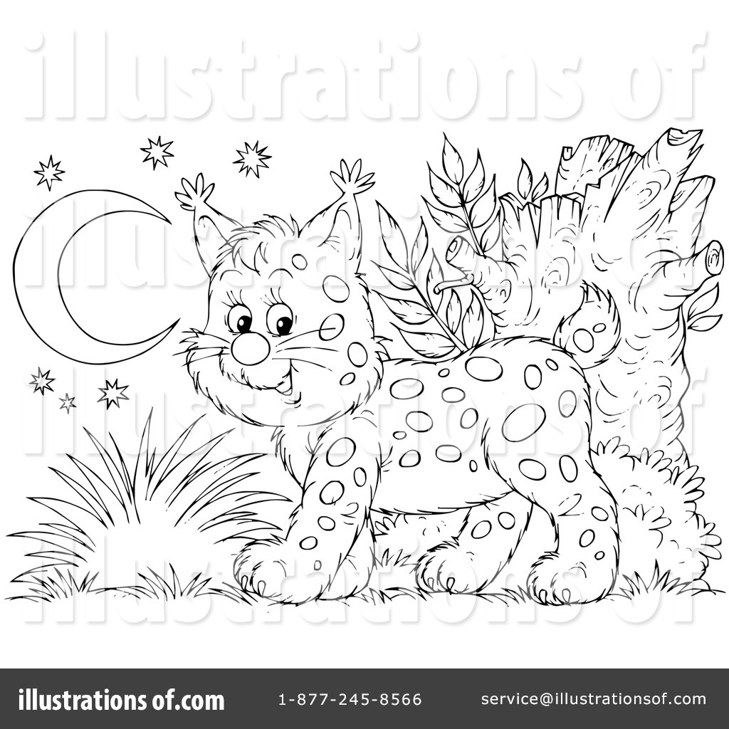 baby bobcat coloring pages - photo #46