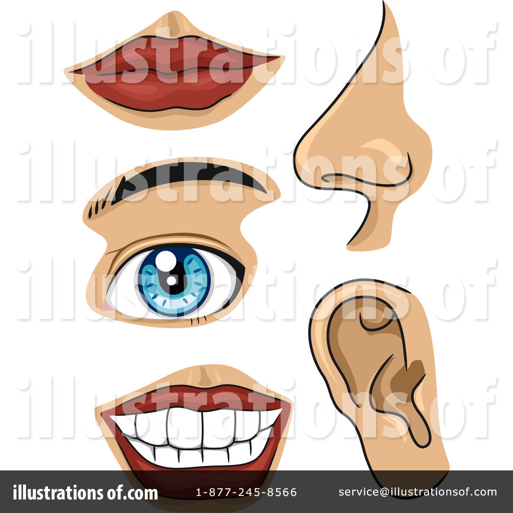 Body Parts Clipart #1150794 - Illustration by BNP Design ...
