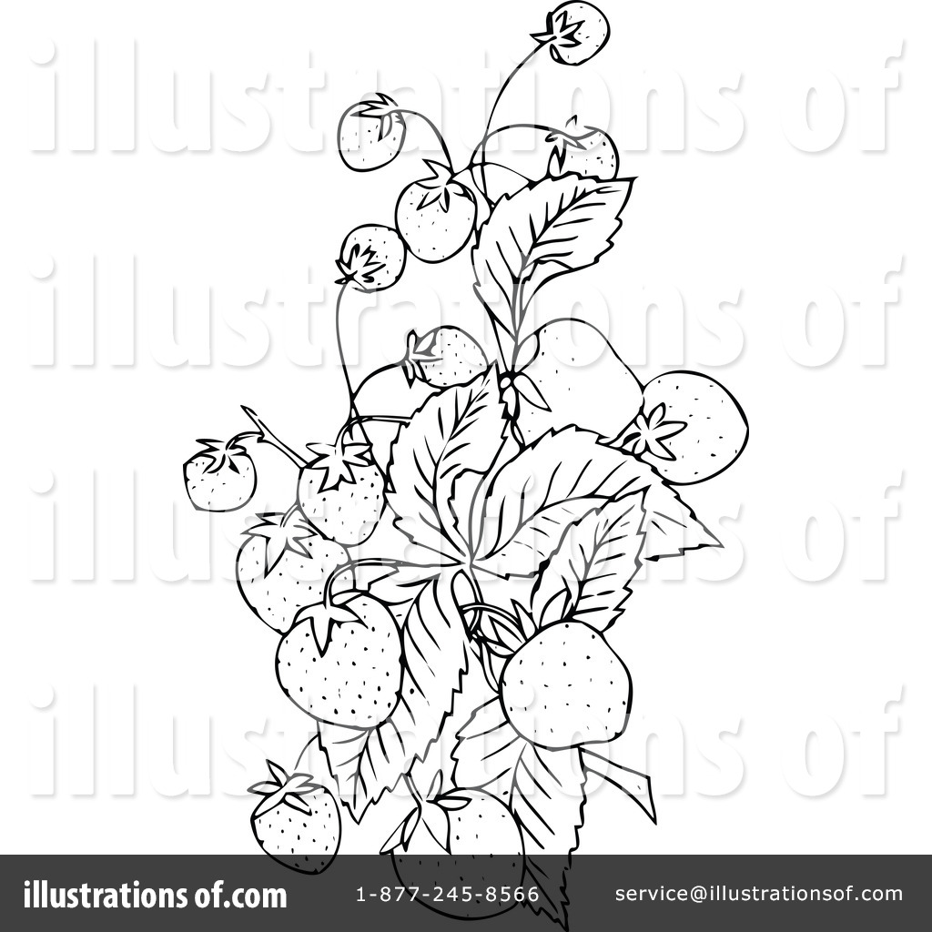 botany coloring pages - photo#31