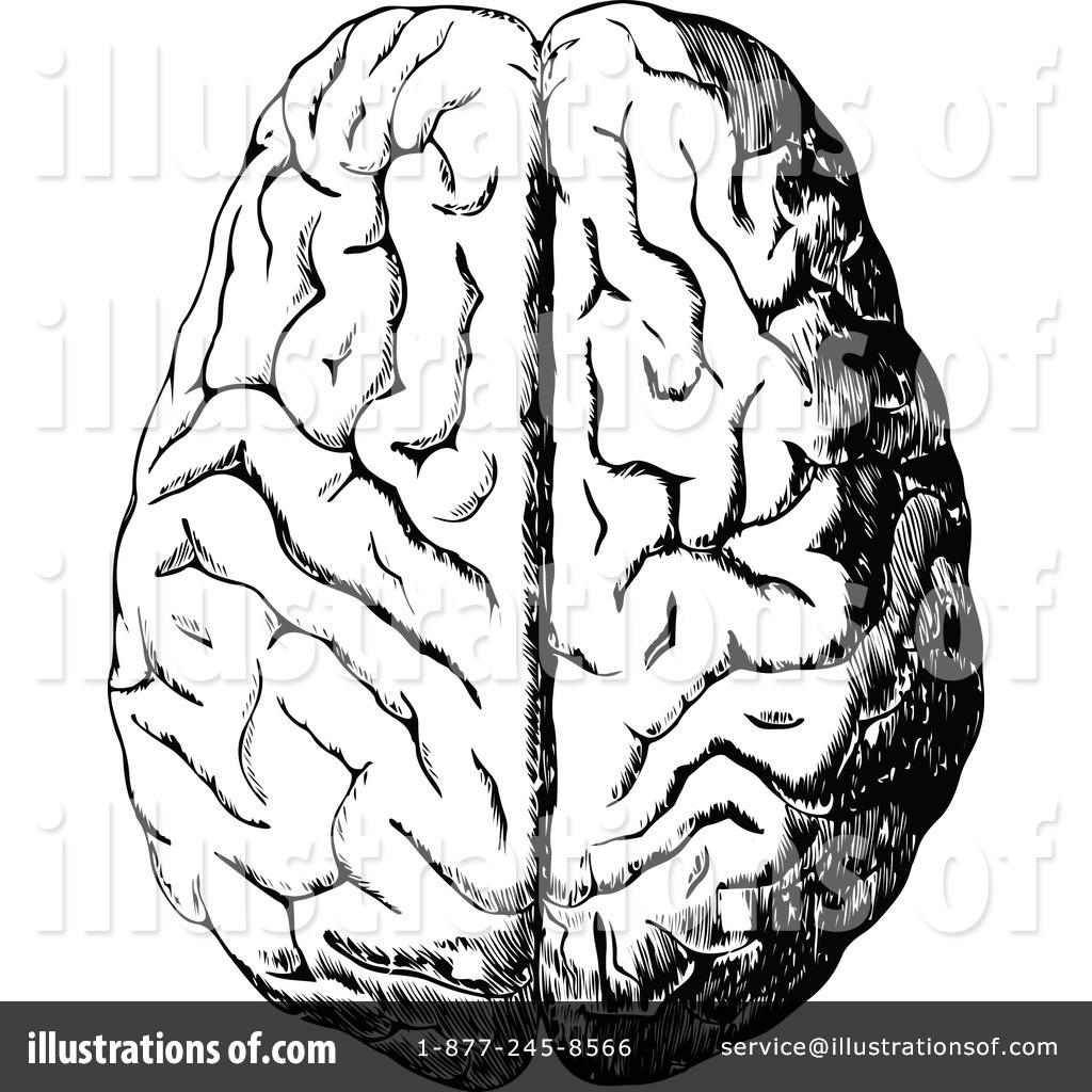 Brain Clipart #1113865...