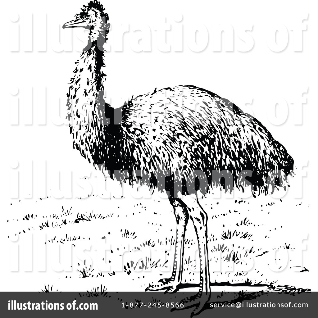 Emu Clipart #1119622 - Illustration by Prawny Vintage