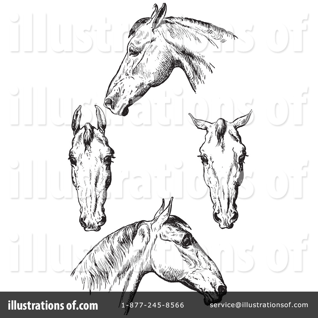 Horse Anatomy Clipart #1135824 - Illustration by Picsburg