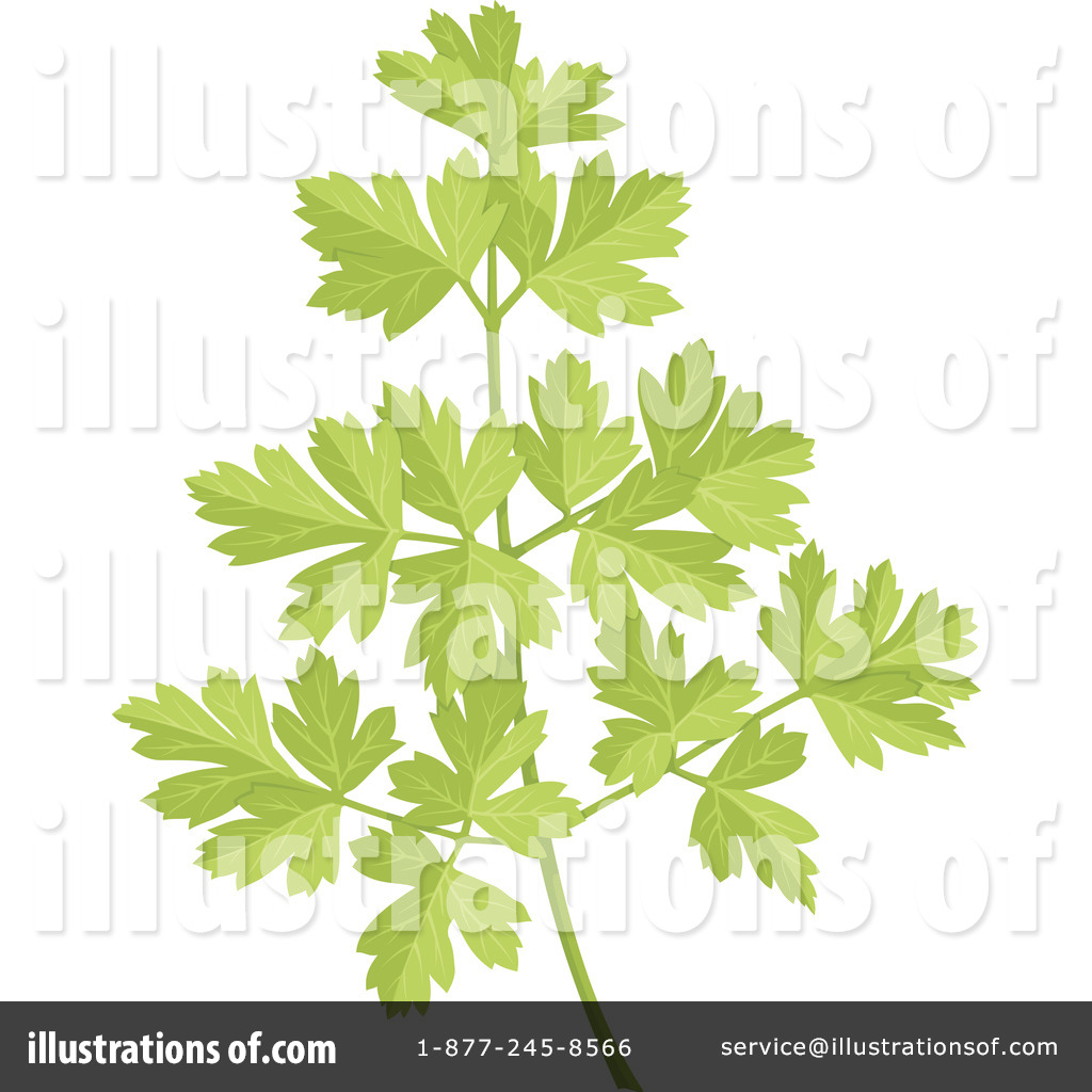 Parsley Illustration Parsley Clipart #10998...