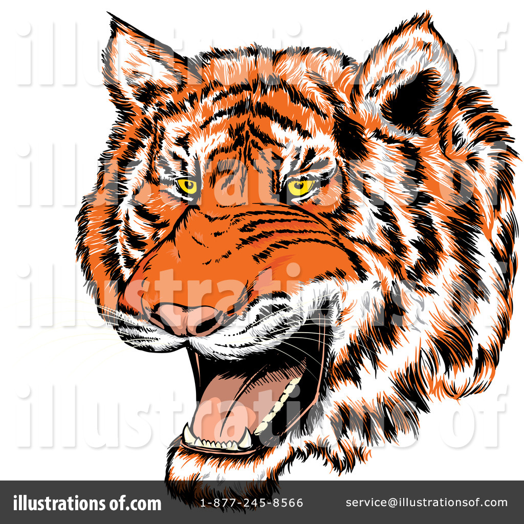 Royalty free tiger illustrations by ron leishman 1 pictures to pin on
