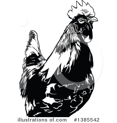 Rooster Clipart #1385542 by dero