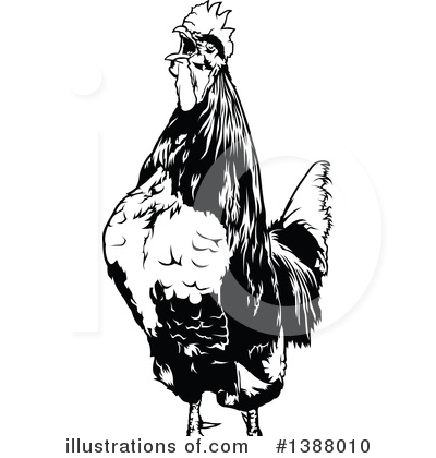 Rooster Clipart #1388010 by dero