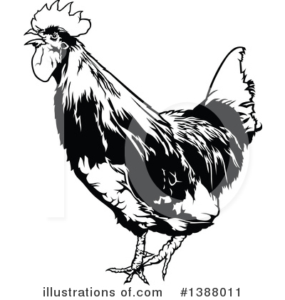 Rooster Clipart #1388011 by dero