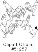 Royalty-Free (RF) Rooster Clipart Illustration #51257