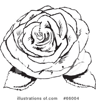 Rose Clipart #66004 by Prawny