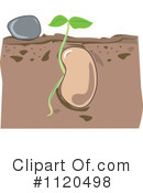 Seedling Clipart #1120498 by Graphics RF