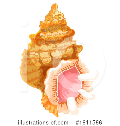 Seashell Clipart #1611586 by Vector Tradition SM