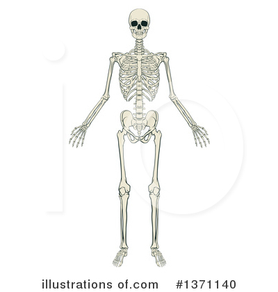 Skeleton Clipart #1371140 by AtStockIllustration