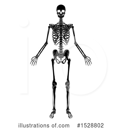 Skeleton Clipart #1528802 by AtStockIllustration