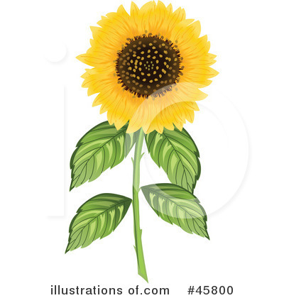 Sunflower Clipart #45800 by Pams Clipart