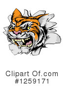 Tiger Clipart #1259171 by AtStockIllustration