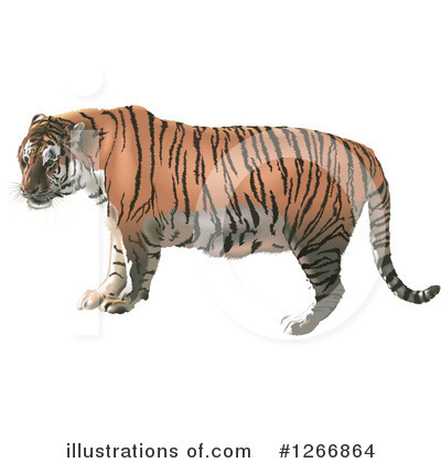 Tiger Clipart #1266864 by dero