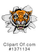 Tiger Clipart #1371134 by AtStockIllustration