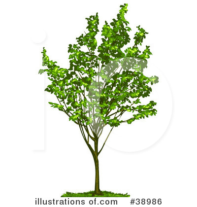 Tree Clipart #38986 by Tonis Pan