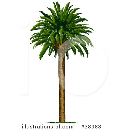 Tree Clipart #38988 by Tonis Pan
