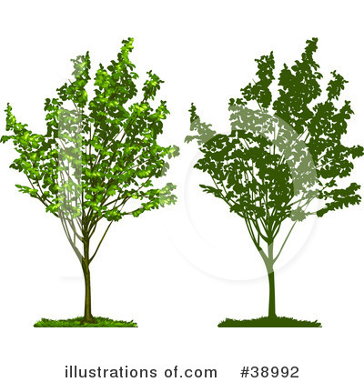 Tree Clipart #38992 by Tonis Pan
