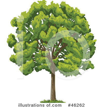 Tree Clipart #46262 by Tonis Pan