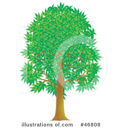 Tree Clipart #46808 by Alex Bannykh