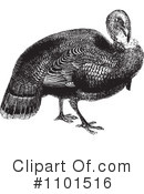 Royalty-Free (RF) Turkey Bird Clipart Illustration #1101516