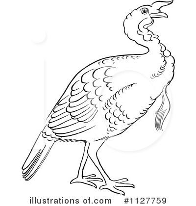 Royalty-Free (RF) Turkey Bird Clipart Illustration by Picsburg - Stock Sample #1127759