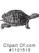 Turtle Clipart #1101519 by BestVector