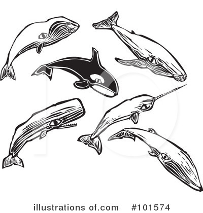 Whale Clipart #101574 by xunantunich