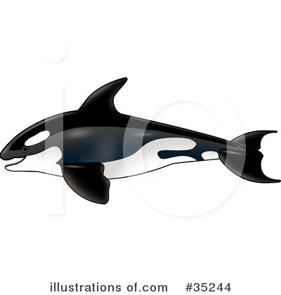 Orca Clipart #35244 by dero