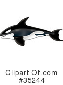 Royalty-Free (RF) whale Clipart Illustration #35244