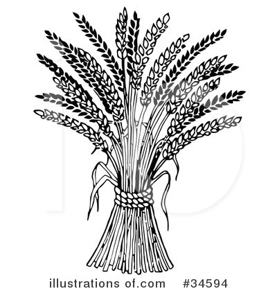 Royalty-Free (RF) Wheat Clipart Illustration by C Charley-Franzwa