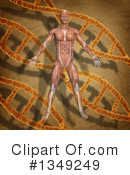 Anatomy Clipart #1349249 by KJ Pargeter