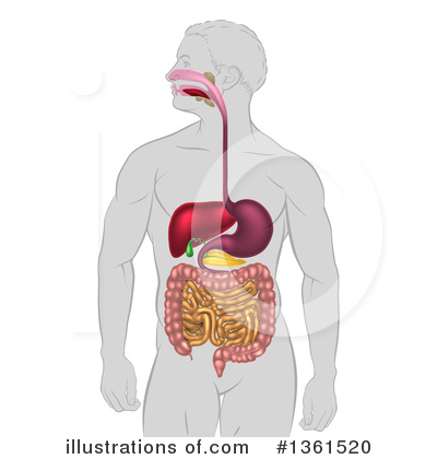 Digestion Clipart #1361520 by AtStockIllustration