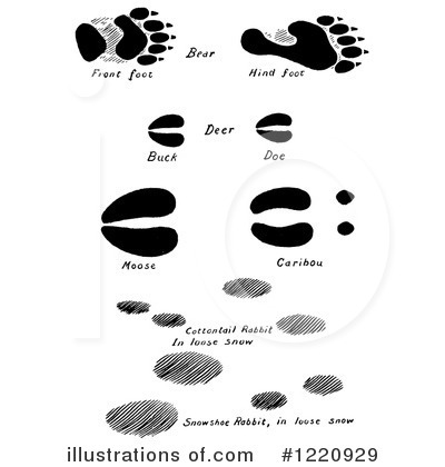 Animal Tracks Clipart #1220929 - Illustration by Picsburg