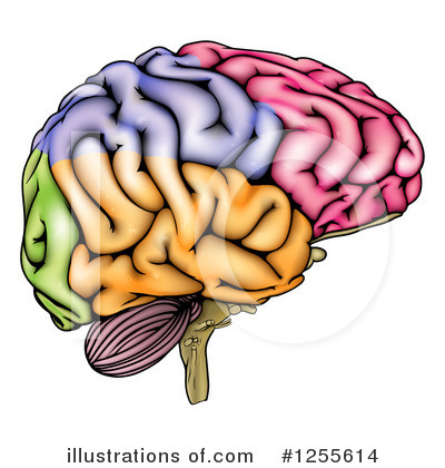 Brain Clipart #1255614 by AtStockIllustration