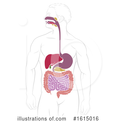 Royalty-Free (RF) Digestion Clipart Illustration by AtStockIllustration - Stock Sample #1615016