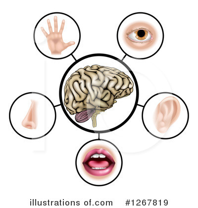 Brain Clipart #1267819 by AtStockIllustration