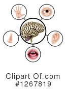 Five Senses Clipart #1267819 by AtStockIllustration