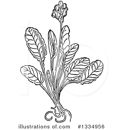 Herb Clipart #1334956 by Picsburg