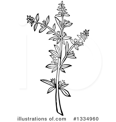 Herb Clipart #1334960 by Picsburg