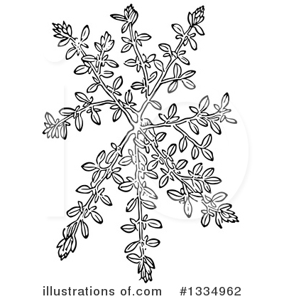 Royalty-Free (RF) Herb Clipart Illustration by Picsburg - Stock Sample #1334962