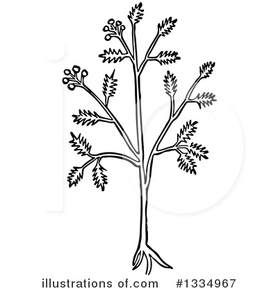 Herb Clipart #1334967 by Picsburg