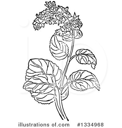 Herb Clipart #1334968 by Picsburg