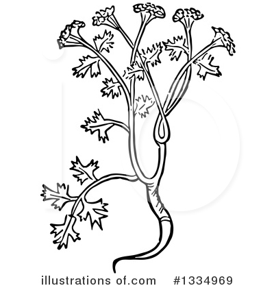 Herb Clipart #1334969 by Picsburg