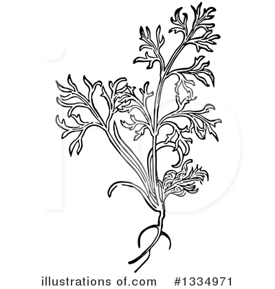 Herb Clipart #1334971 by Picsburg