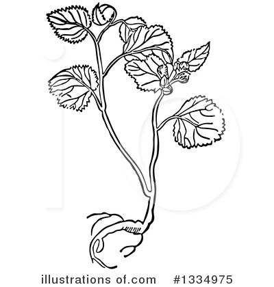 Herb Clipart #1334975 by Picsburg
