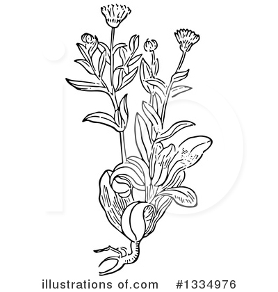Herb Clipart #1334976 by Picsburg