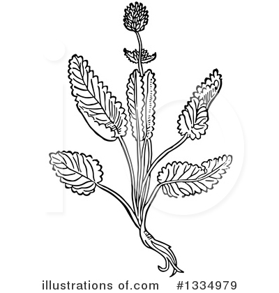 Herb Clipart #1334979 by Picsburg